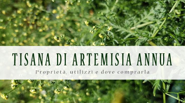 Tisana di Artemisia annua: proprietà, utilizzi e dove comprarla