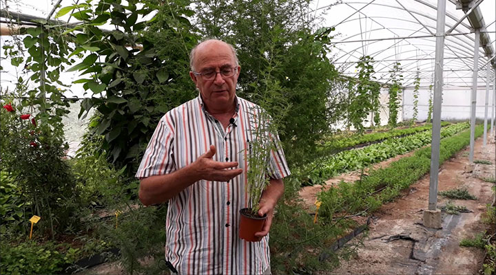 Interview with Josep Pàmies on the properties of Artemisia Annua