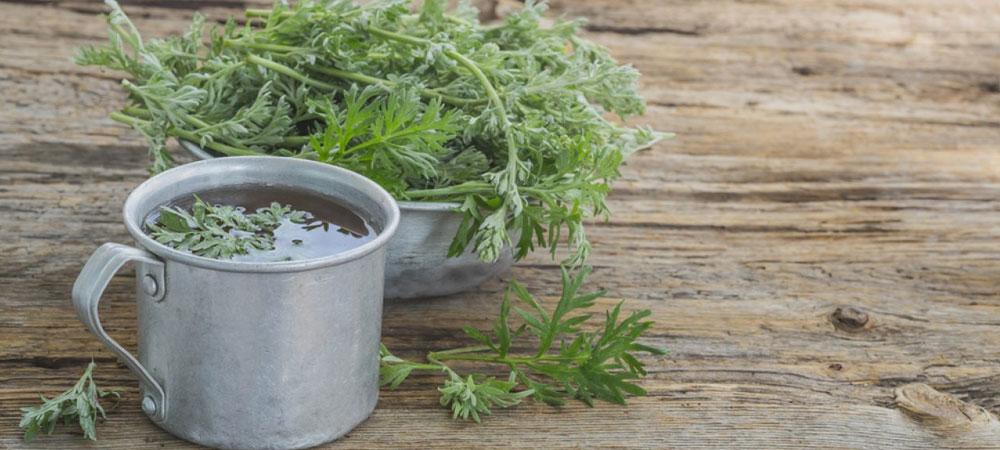 Kräutertee Artemisia annua: Eigenschaften, Verwendung und Bezugsquellen