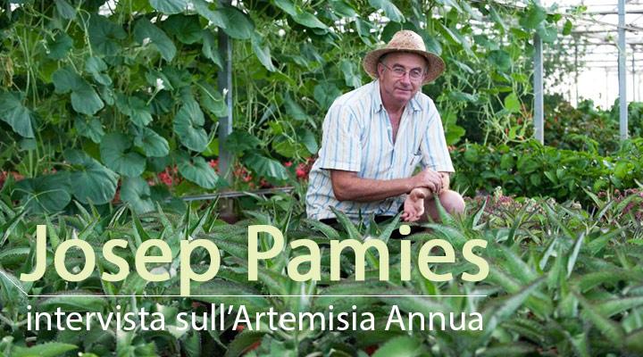 Interview mit Josep Pàmies über die Eigenschaften von Artemisia Annua